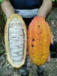 Fruchtpulpen
