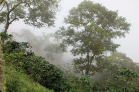 Kaffeeanbaugebiet