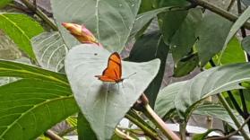 Schmetterling sitznd auf einen Blatt