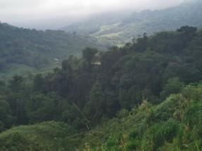 Bergwälder